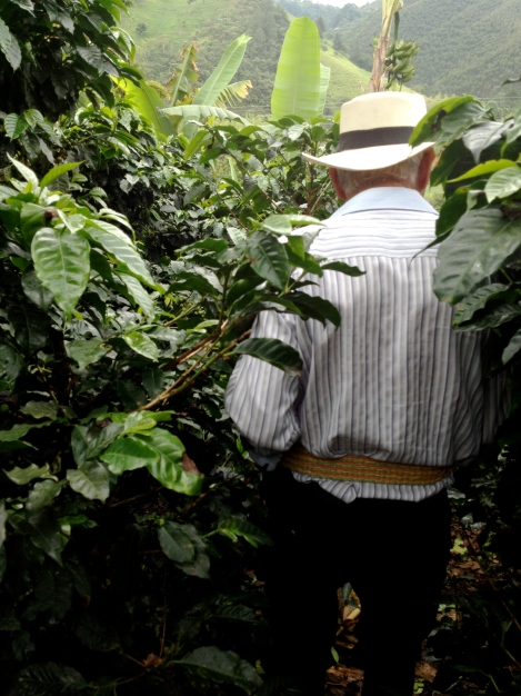 Cute little old Colombian man giving a tour of his coffee plantation